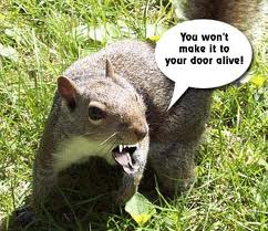 evil-squirrel